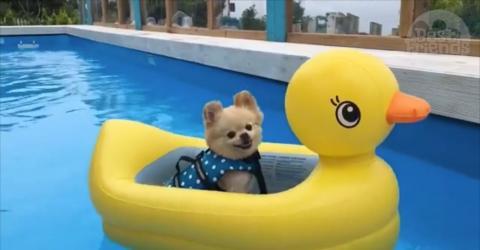 bateau gonflable pour chien