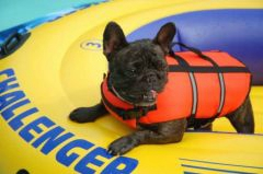 bateau gonflable chien